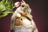 11415507-deux-lapins-et-un-panier-d-39-ufs